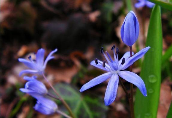 Вот какие цветы можно посадить и посеять в августе...