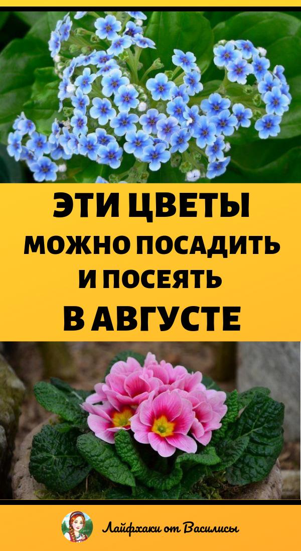 Цветы, которые растут в августе. Дача и цветы