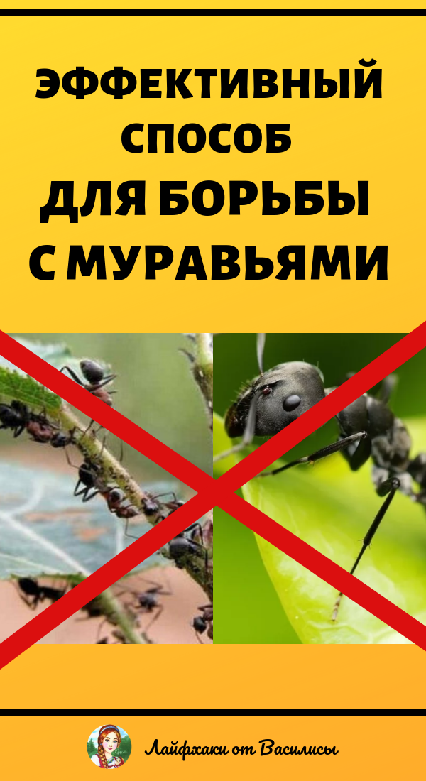 Борьба против муравьев на садовом участке народные средства