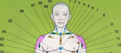 Проекционные зоны внутренних органов на теле человека по Огулову — узнайте себя лучше!
