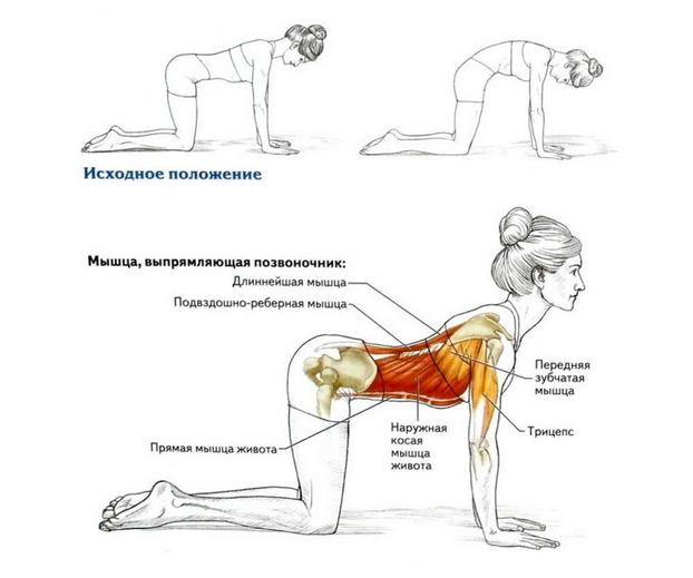Омолаживающие 8 упражнений для укрепления спины...