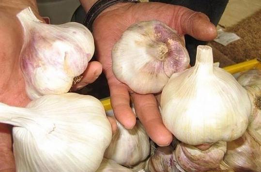 Основные хитрости посадки чеснока на зиму для получения большого урожая...