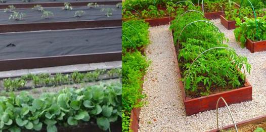 Идеальный огород своими руками — личный опыт...