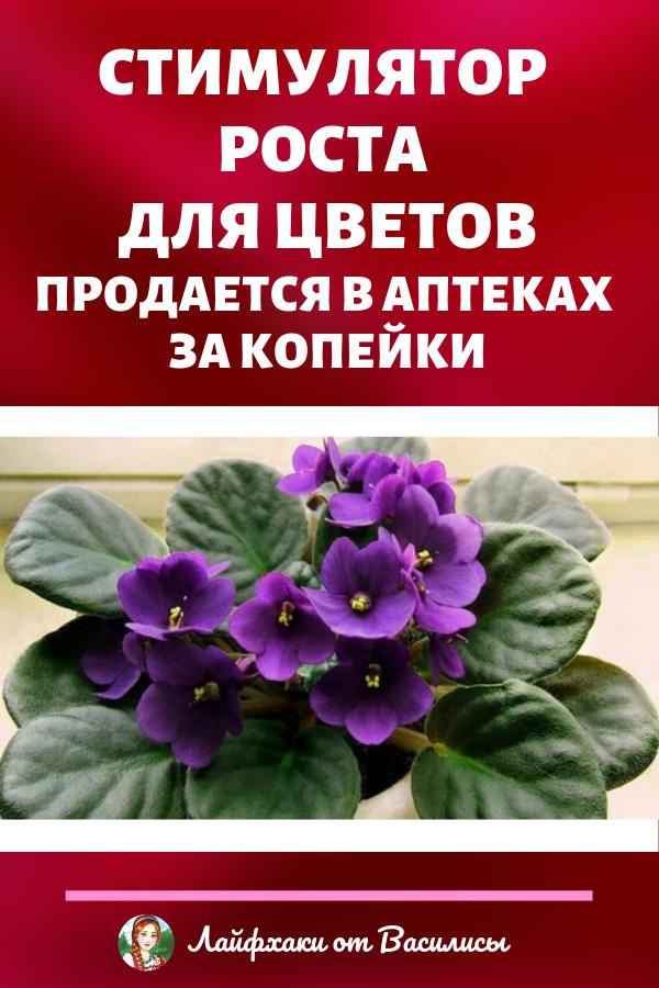Стимулятор роста для растений в домашних условиях для цветов