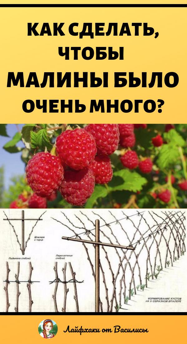 Как обрезать малину летом, чтобы был хороший урожай. Дача и огород