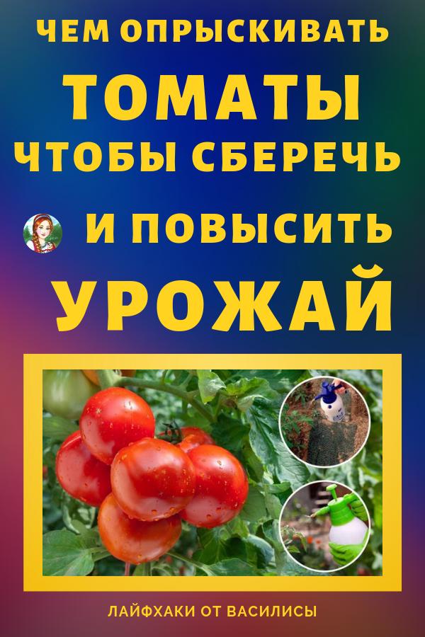 Летом молодые томаты особенно нуждаются в защите от болезней и вредителей. Не лишним будет и проведение внекорневых подкормок, которые позволят сформироваться крепким завязям и плодам, сделают растения более выносливыми. Советы и лайфхаки, как повысить и сберечь урожай. Томаты своими руками.