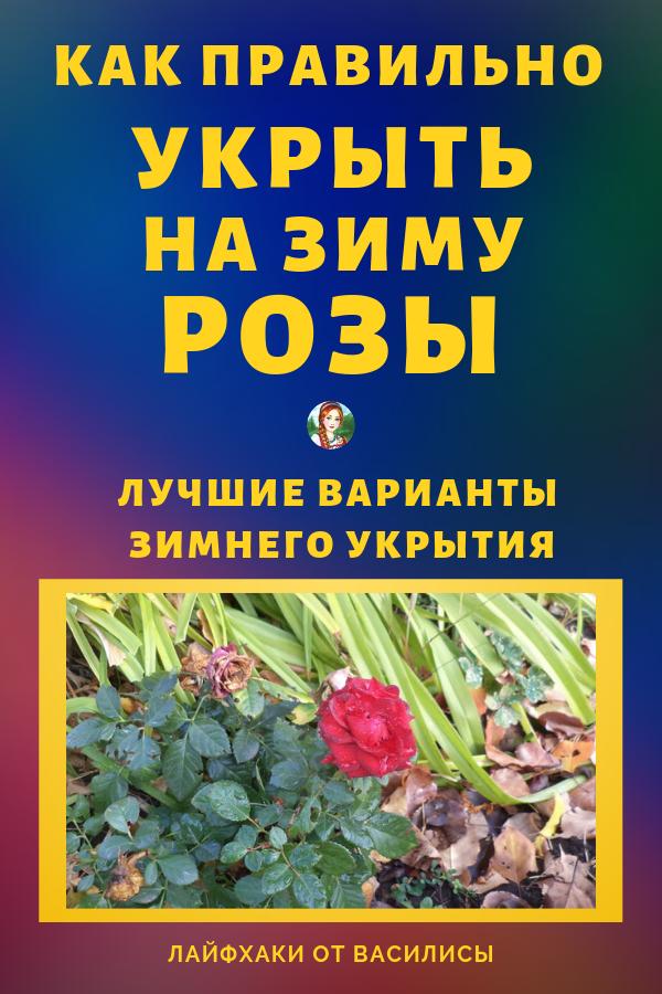 Разные способы укрытия роз на зиму предназначены для разных сортов и разновидностей этого растения, поэтому рассмотрим только самые популярные. Идеи для дачи своими руками + советы.