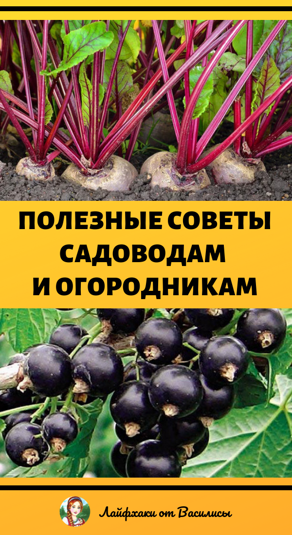 Полезные советы садоводам и огородникам