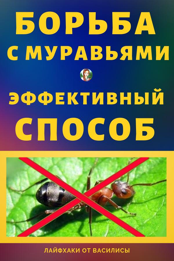 Садовые муравьи наносят серьезный вред растениям, питаясь их соком. Очень большой урон саду приносит также симбиоз муравьев и тлей. Советы для огорода и дачи: борьба с муравьями своими руками.