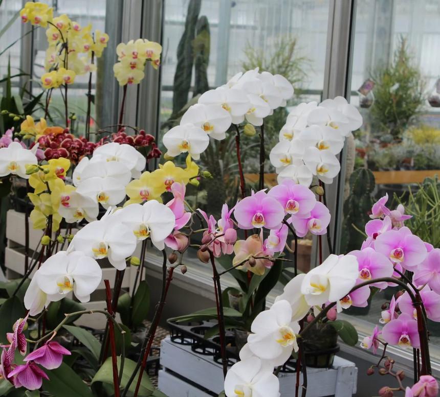 Девочки, делюсь маминым способом заставить цвести любую орхидею. Уютный дом своими руками
