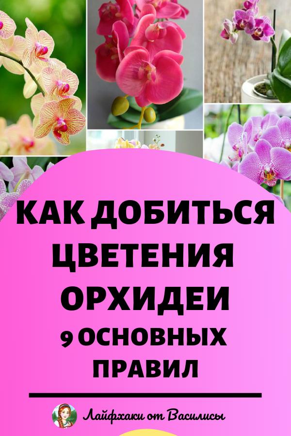 Как добиться цветения орхидеи: 9 основных правил